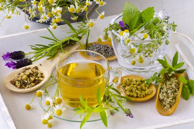 Medicina alternativa Terapia di erbe fotografie stock libere da diritti