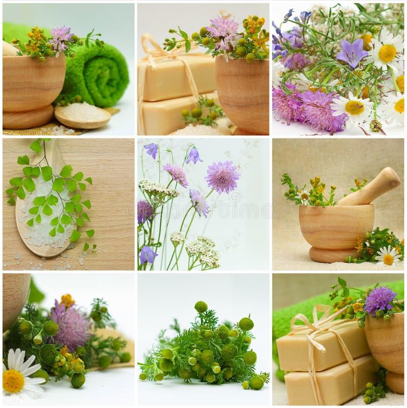Medicina alternativa y tratamiento herbario fotos de archivo