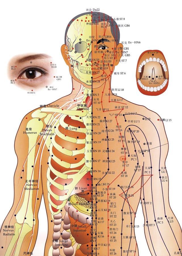 Medicina chinesa - carta da acupunctura ilustração do vetor