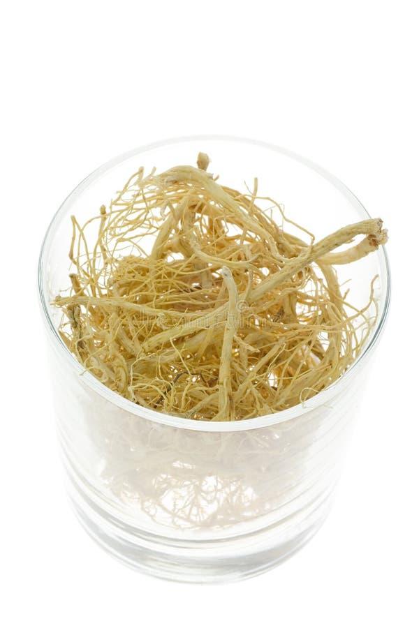 Medicina cinese tradizionale - il Ginseng sradica (ginseng del Panax) fotografia stock libera da diritti