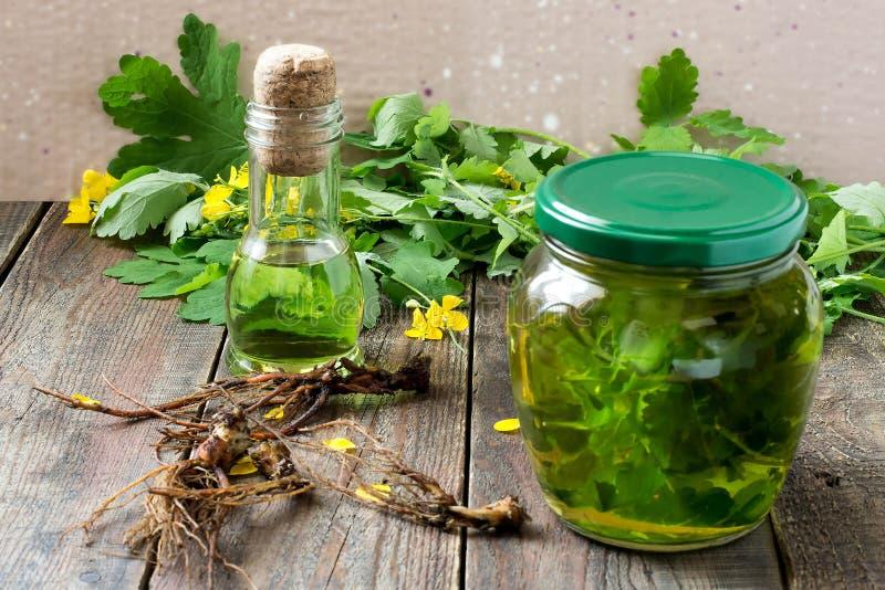 Medicina herbaria: celandine, tinte, aceite y raíces imagenes de archivo