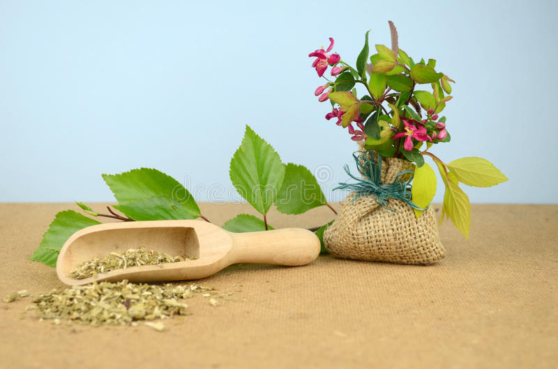 Medicina herbaria natural de los tintes imagen de archivo