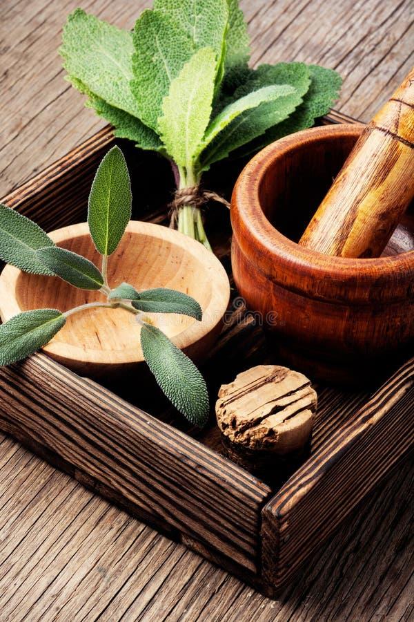 Medicina natural, ervas imagem de stock royalty free