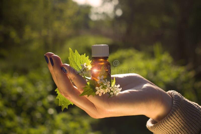 Medicina naturale - di erbe immagine stock libera da diritti
