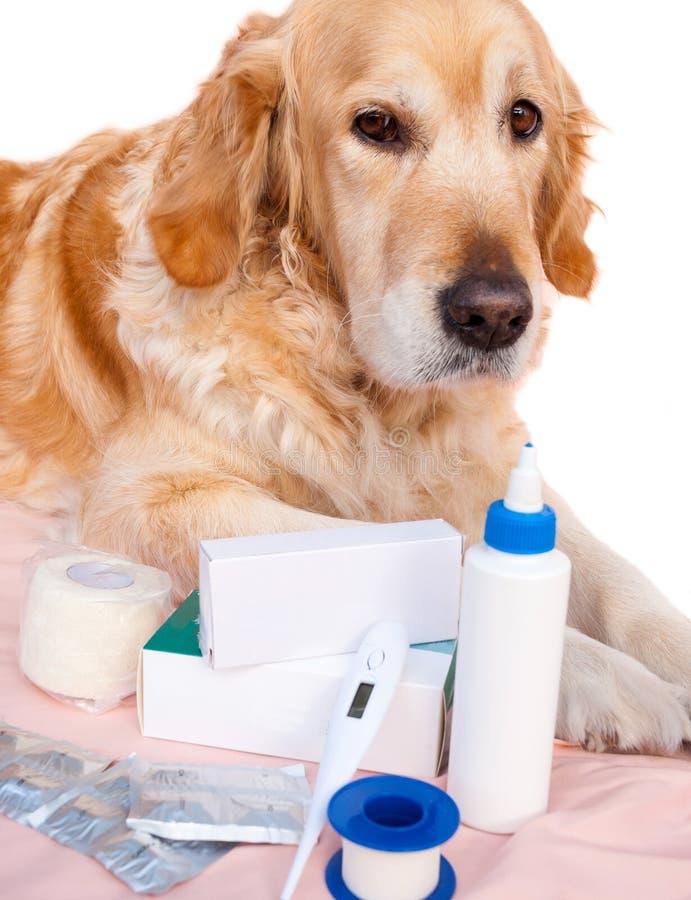 Medicina per cani fotografia stock