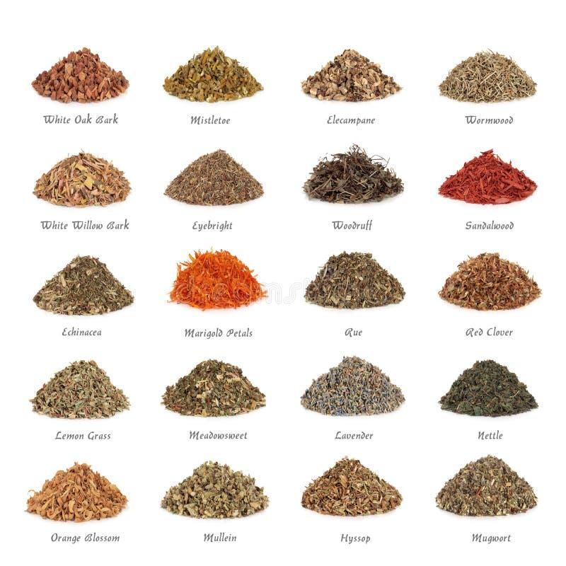 Free Medicinal And Magical Herbs Stock Image - 12592831