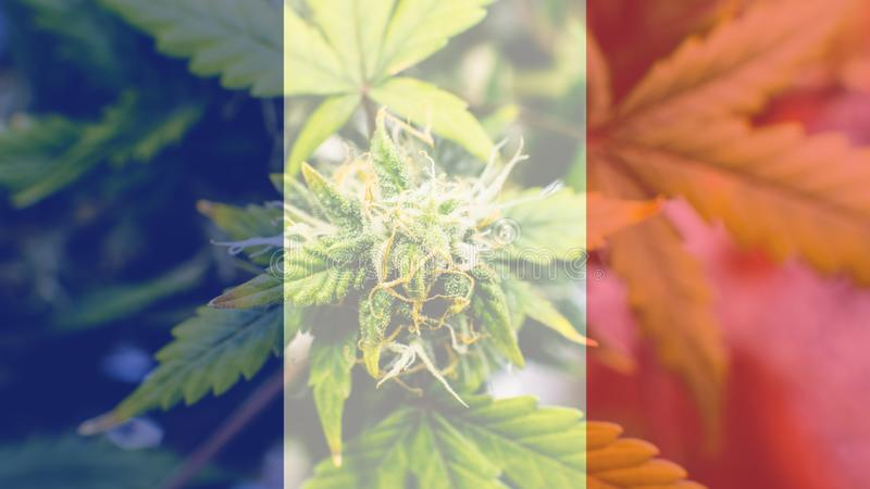 Nmedicinal cannabis use in France for recreational . France cannabis news in 2019 royalty free stock image