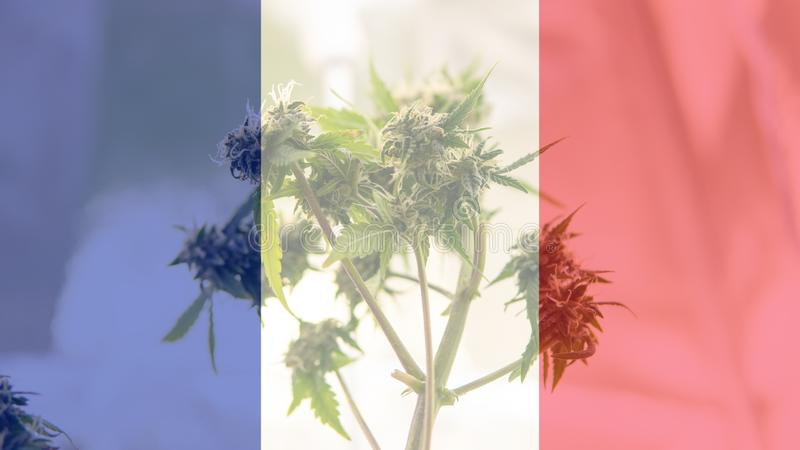 Nmedicinal cannabis use in France for recreational . France cannabis news in 2019 royalty free stock photo