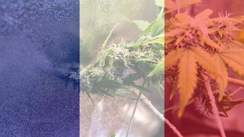 Nmedicinal cannabis use in France for recreational . France cannabis news in 2019 stock images