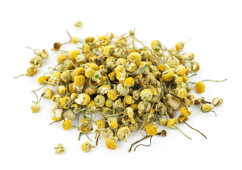 Medicinal chamomile herbs stock photos