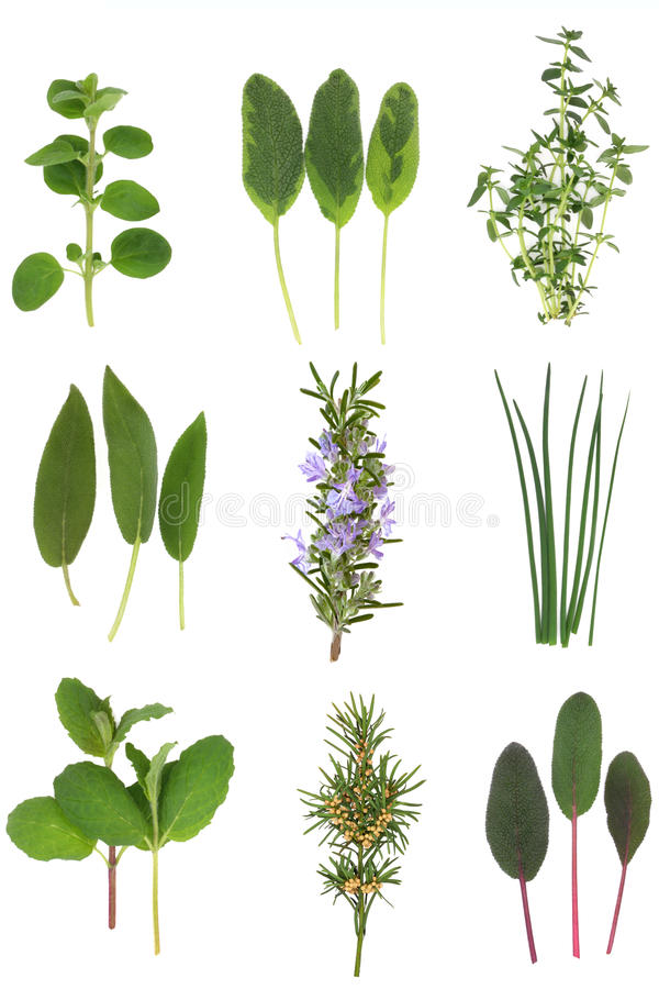 Download Medicinal And Culinary Herb Leaves Stock Image - Image: 16825989