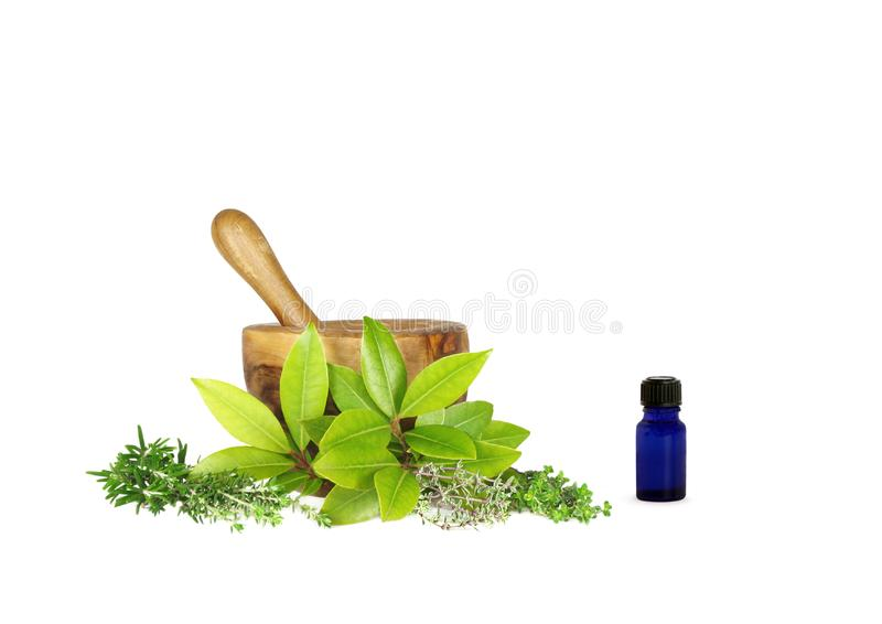 Medicinal And Culinary Herbs Free Stock Image