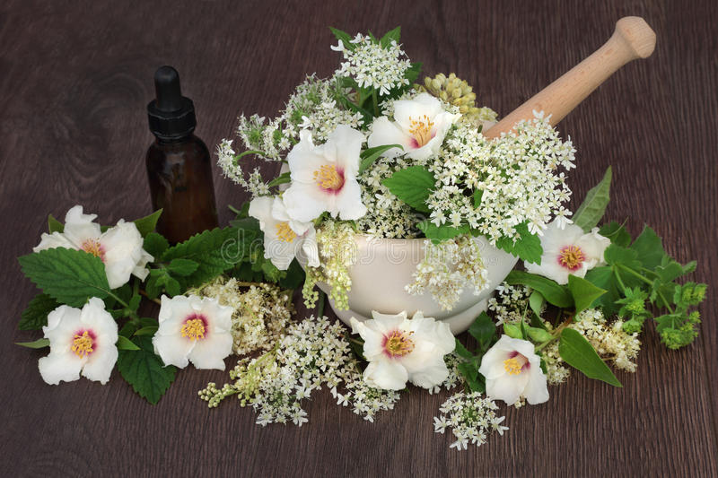 Medicinal Flowers and Herbs stock photography