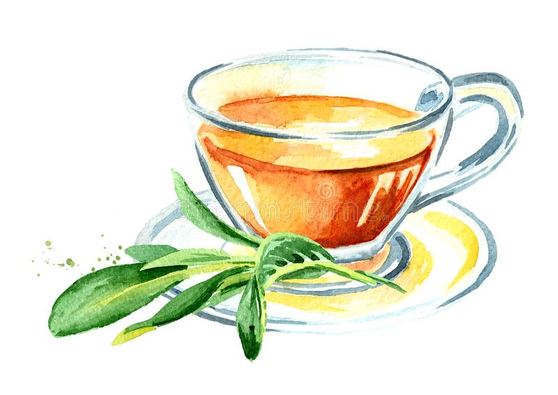 Medicinal herb Salvia officinalis. Cup of medical tea. Infusion made from sage leaves. Hand drawn watercolor illustration isolated. On white background stock illustration
