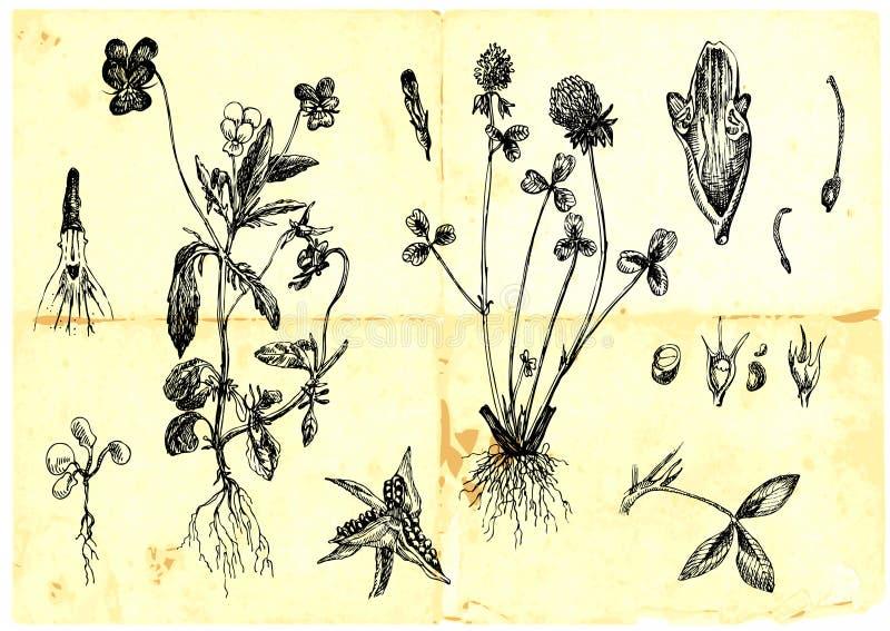 Download Medicinal Herbs Royalty Free Stock Photography - Image: 24061407