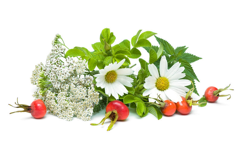 Medicinal herbs isolated on white background. horizontal photo. royalty free stock photos