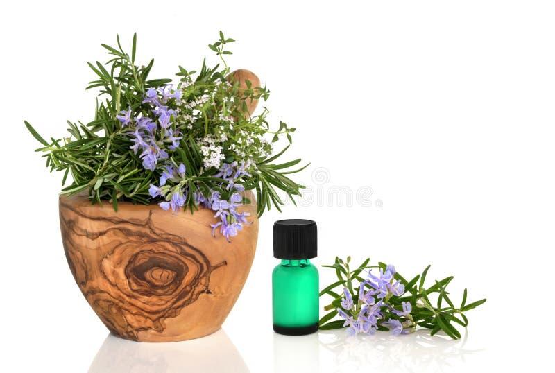 medicinal kulinariska örtar royaltyfria bilder