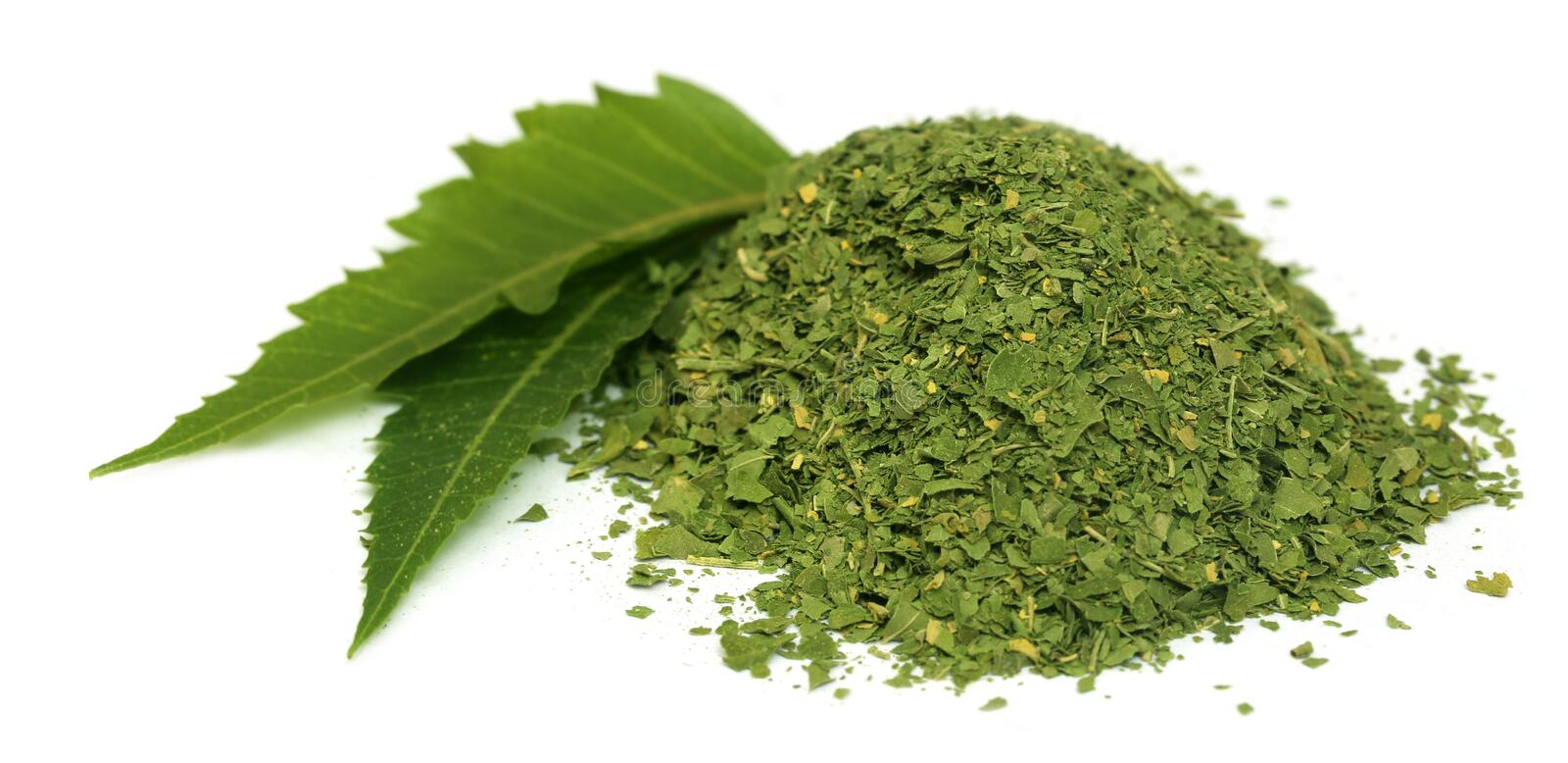 Medicinal neem leaves with dried powder stock images