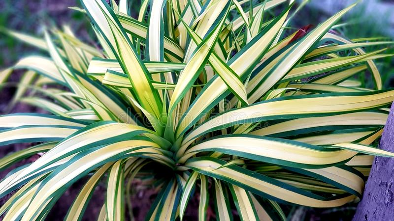 Medicinal plant in a vase royalty free stock images