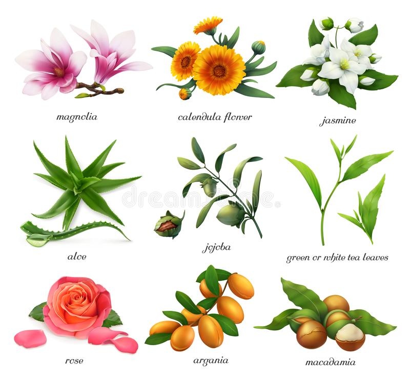 Medicinal plants and flavors. Magnolia, calendula flower, jasmine, aloe, jojoba, tea, rose, argania and macadamia. 3d vector stock illustration