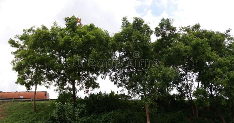 The medicinal trees named as `Neem` grown in Road side. The medicinal trees named as `Neem` grown in Road side along with other plants and trees with blossoming royalty free stock photos