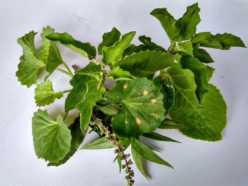 medicinal växter royaltyfri fotografi