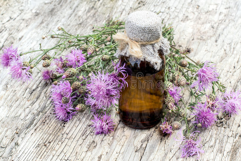 MedicinalväxtCentaureajacea och farmaceutisk flaska arkivbild