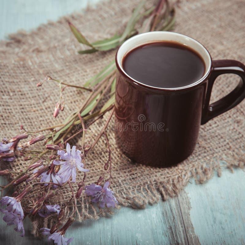 Medicinalväxtcikoria: blommor Rotar av växterna används som en ersättning för kaffe Dricka från cikorien i en kopp på fotografering för bildbyråer
