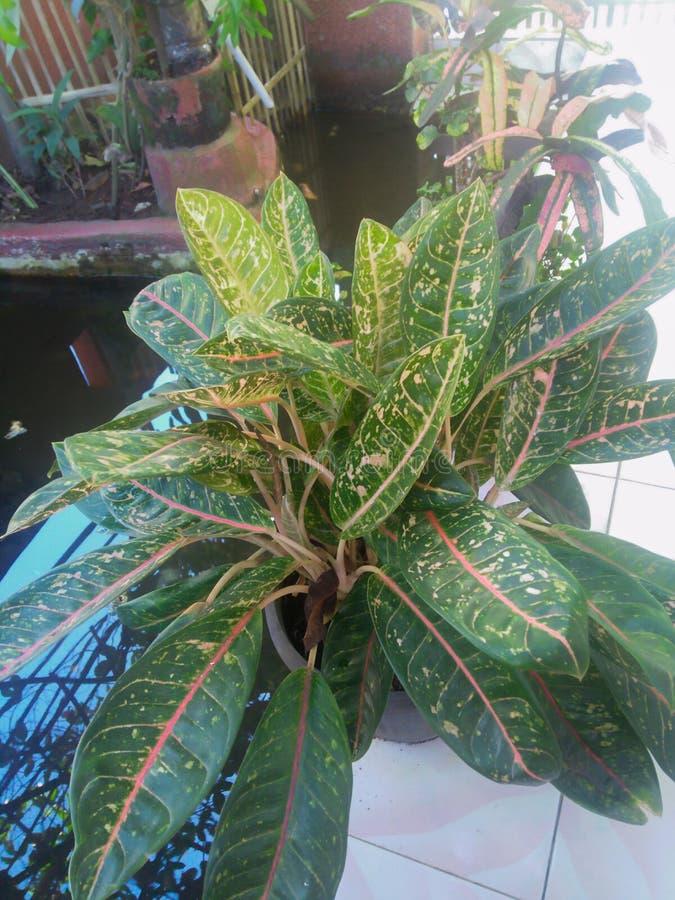 medicinalväxter i min trädgård royaltyfria bilder