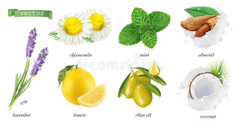 Medicinalväxter och anstrykningar, kamomill, mintkaramell, lavendel, citron, mandlar, kokosnöt, olivolja symbolsuppsättning för v stock illustrationer