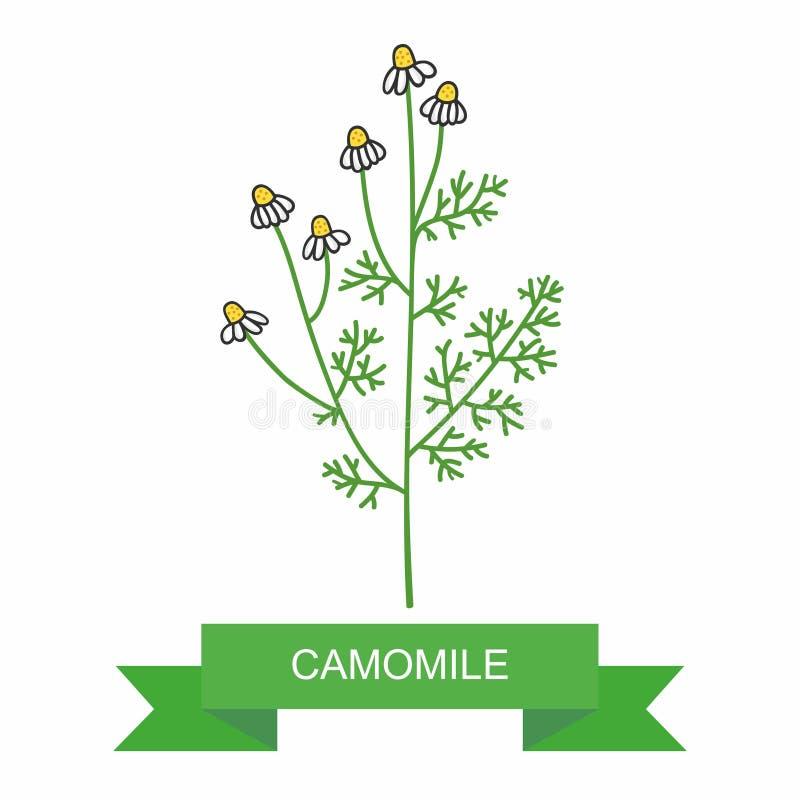 Medicinalväxtkamomillofficinalis tusenskönakedja på vit bakgrund medicinal örtar vektor illustrationer