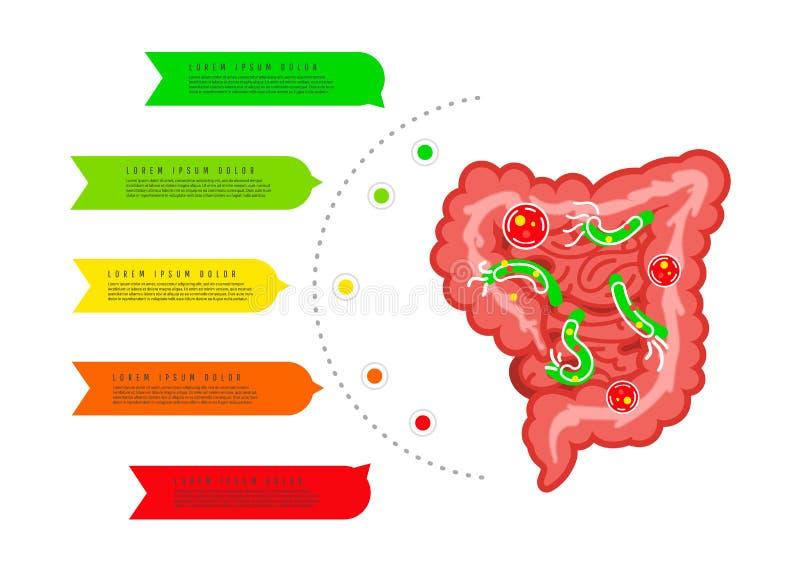 Digestive tract with bacteria, virus. Medicine, biology concept. Large intestine Gastrointestinal tract. Medicine, biology concept. Large intestine stock illustration
