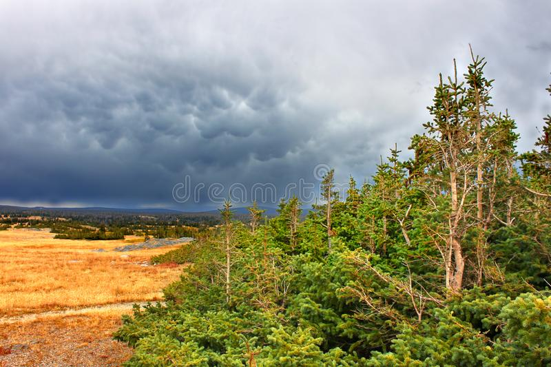 Medicine Bow National Forest Libby Flats royalty free stock photos