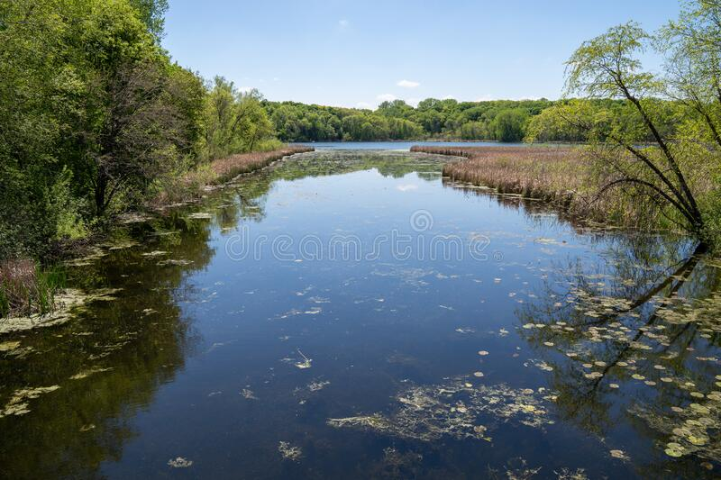 Medicine Lake in Clifton E French Regional Park in Plymouth Minnesota. Lilypads and algae in the water.  stock photos