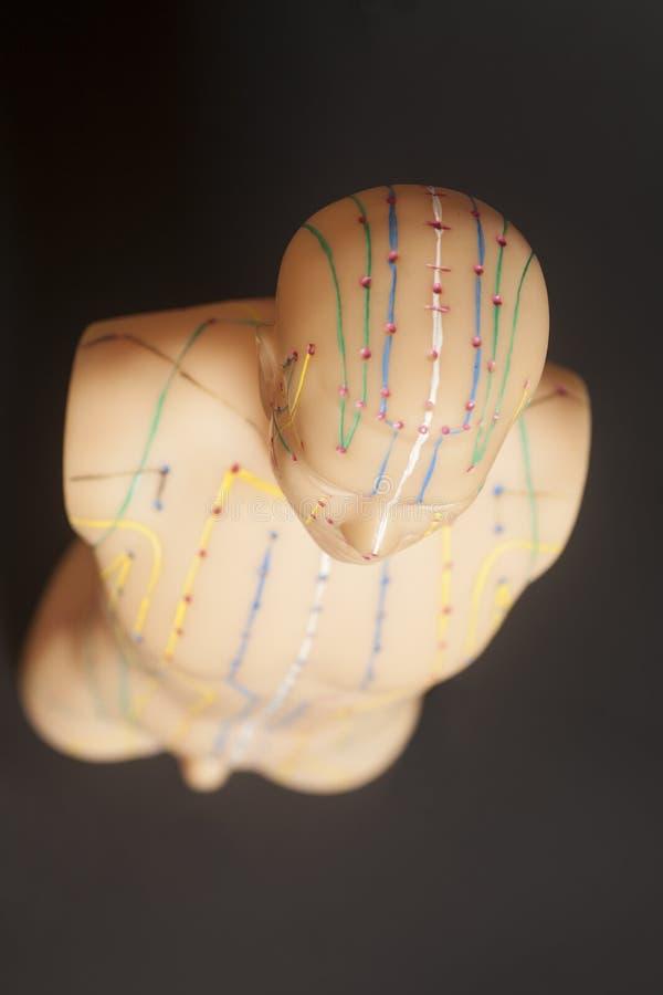Medicinsk akupunkturmodell av människan på svart fotografering för bildbyråer