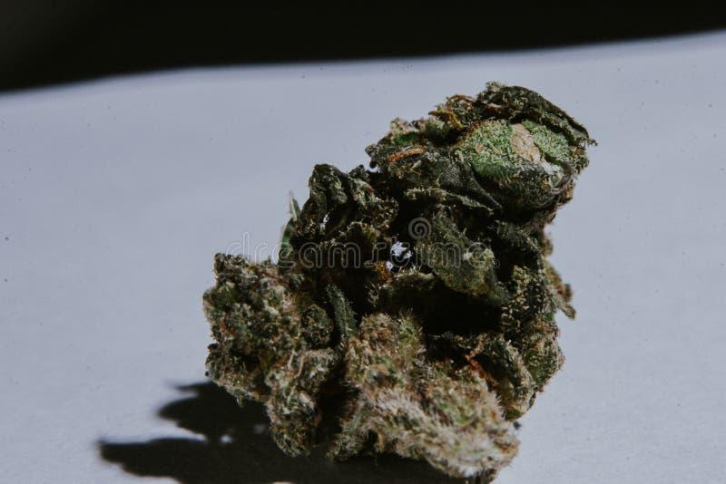 Medicinsk marijuana, cannabis, Sativa som är indica, Trichomes, THC, CBD, cancerbot, ogräs, blomma, hampa, gram, knopp fotografering för bildbyråer