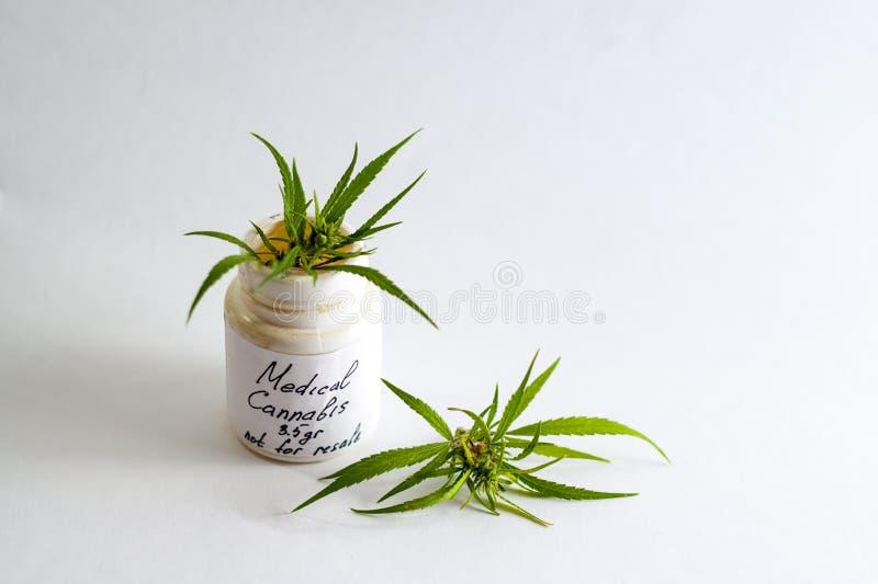 Medicinsk marijuanacannabis för behandlingen av en doktor royaltyfria foton