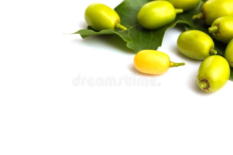 Medicinsk neem b?r frukt med ris royaltyfri fotografi