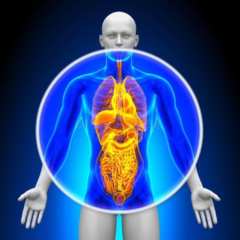 Medicinsk röntgenstrålebildläsning - alla organ stock illustrationer