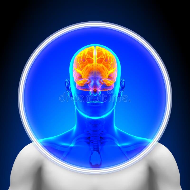 Medicinsk röntgenstrålebildläsning - hjärna royaltyfri illustrationer