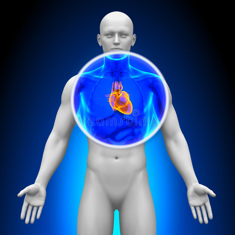 Medicinsk röntgenstrålebildläsning - hjärta royaltyfri illustrationer