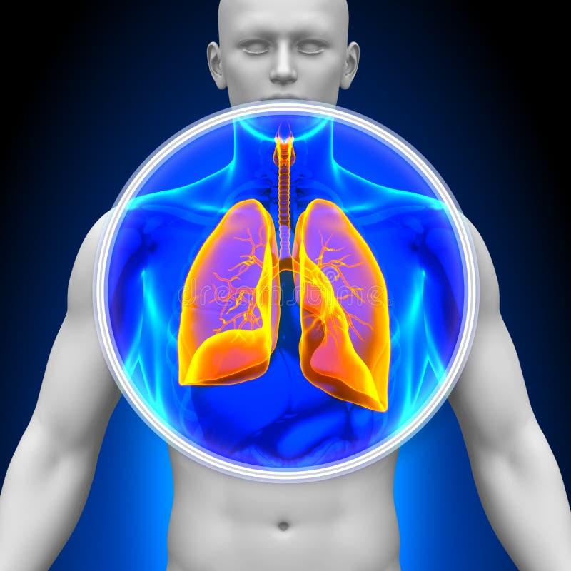 Medicinsk röntgenstrålebildläsning - lungor stock illustrationer