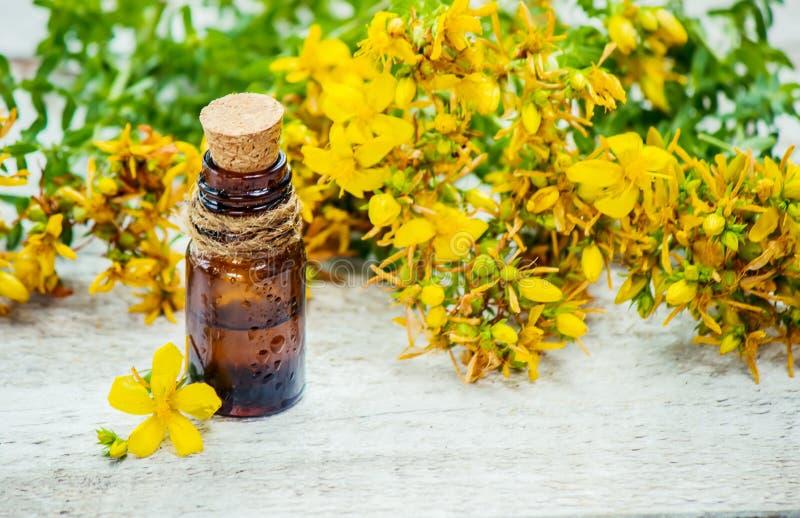 Medicinsk wort för St John ` s homeopathy royaltyfri foto