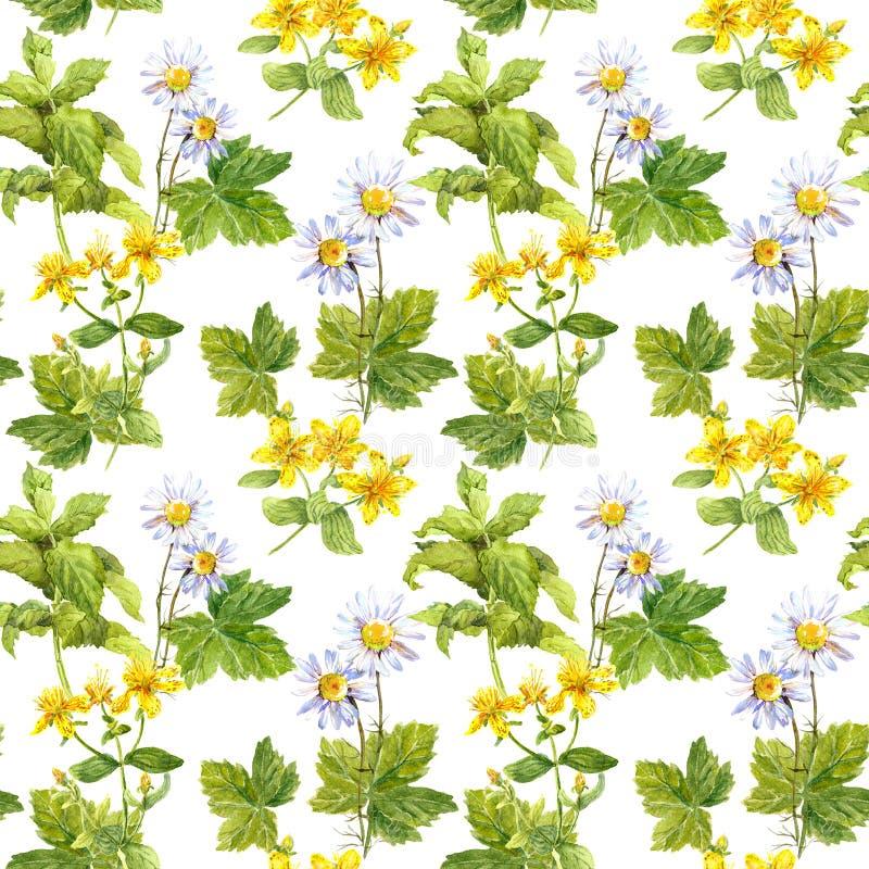 Medicinska örter, läkarundersökningblommor Växt- blom- upprepande modell vattenfärg royaltyfri illustrationer