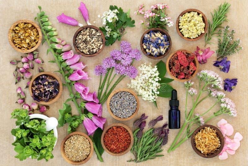 Medicinska blommor och örter royaltyfri fotografi