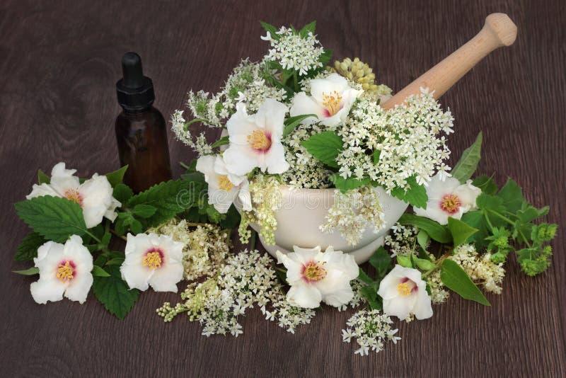 Medicinska blommor och örter arkivbild