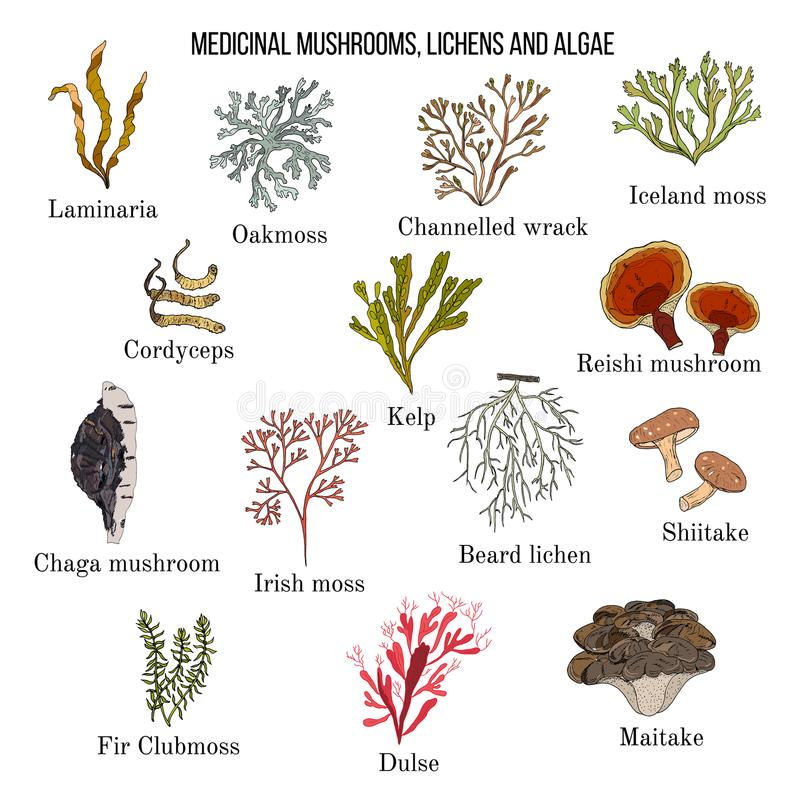 Medicinska champinjoner, laver och havsväxter royaltyfri illustrationer