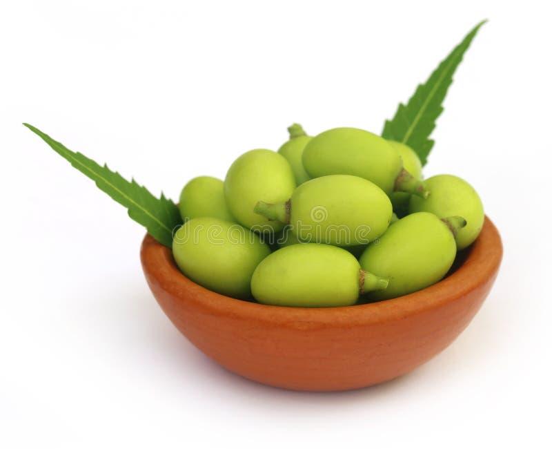 Medicinska neemfrukter fotografering för bildbyråer