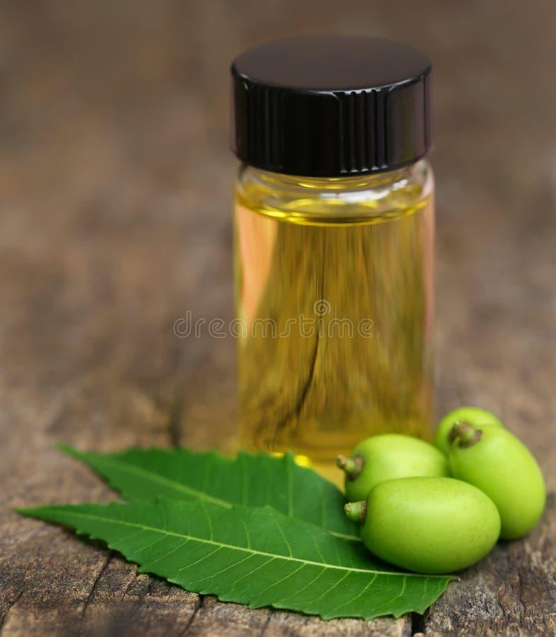 Medicinska neemsidor med nödvändig olja arkivfoto