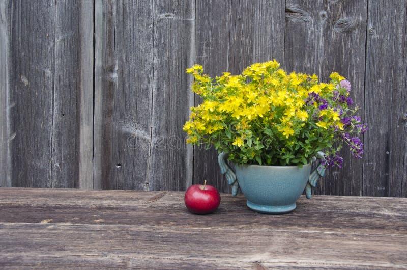 Medicinska nya St Johns wortblommor och äpple royaltyfri bild